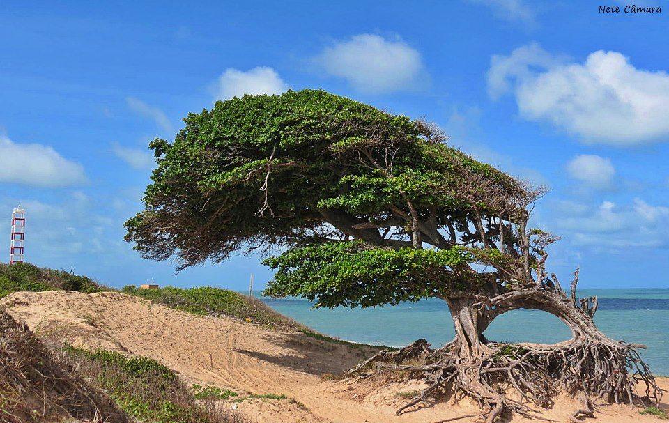 Cabo de São Roque - RN