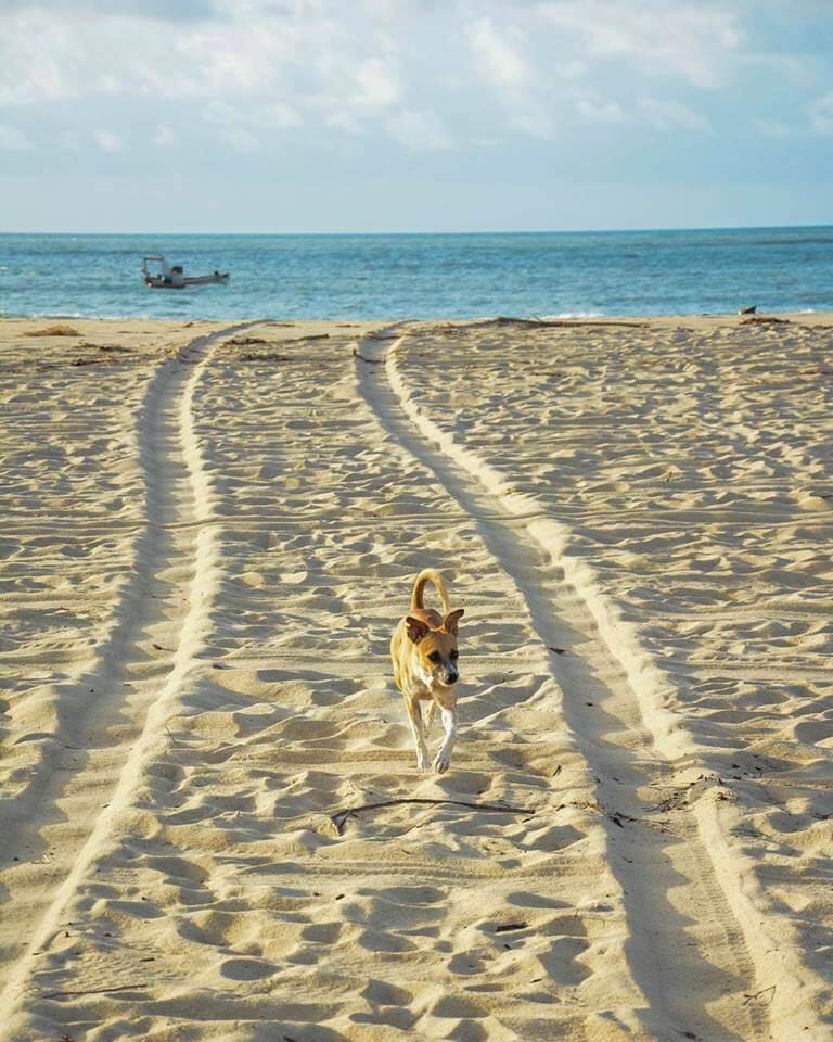 Praia-de-Sao-Miguel-do-Gostoso-RN
